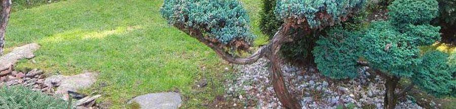 Камень и сад своими руками