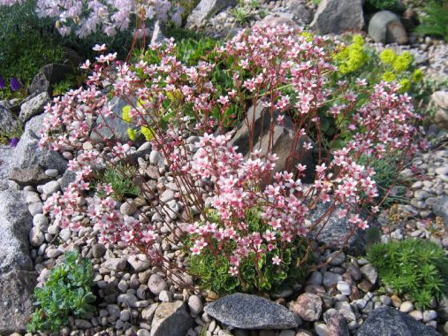 подбор растений и почвы