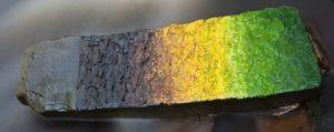цвет на камне