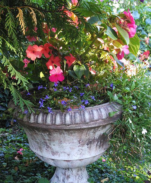 бальзамин в бетонной вазе