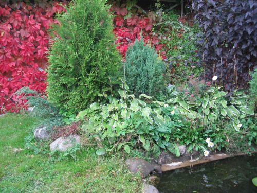Около пруда в саду